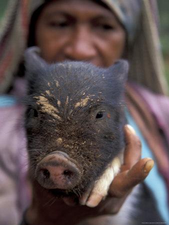 huli-woman-holding-a-pig-tari-papua-new-guinea-oceania-posters.jpg