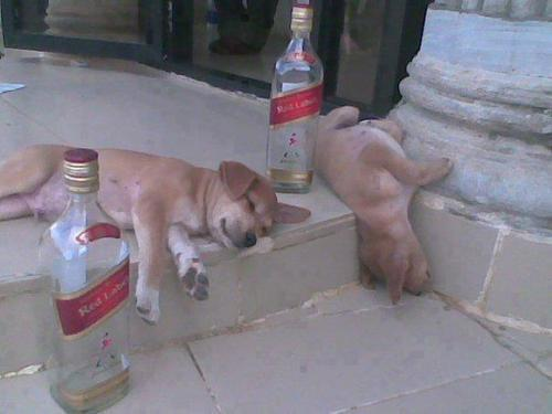 Johnny Walker Puppies