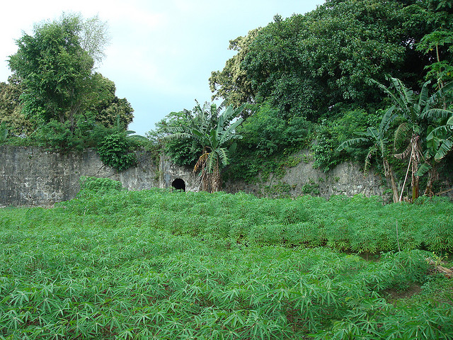 Fort Revenge on Pulau Ai